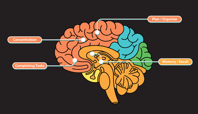 How Grief Affects Your Brain